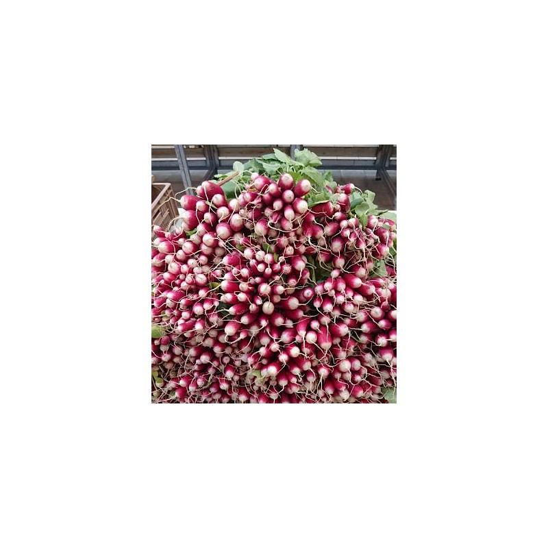Radis rose great carpaccio de radis rose au ssame et au poivre noir with radis rose free radis - Radis rose de chine ...