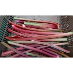rhubarbe kg