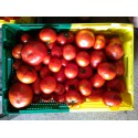 tomate   kg *