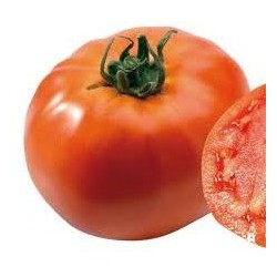 Tomate BALI