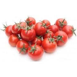PLANTS - Tomate cerise - variété SWEET 100