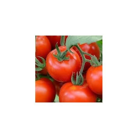 Tomate variété FANDANGO