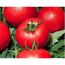 Tomate ronde variété COBRA