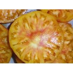 Tomate cotelée jaune variété ANANAS
