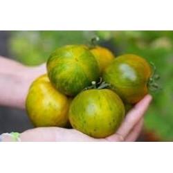 Tomate variété GREEN ZEBRA