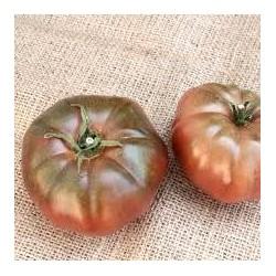 Tomate variété NOIR DE CRIMEE
