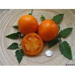Tomate variété ORANGE QUEEN